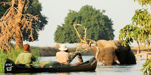 Safari en canoë sur le Zambèze - rencotre avec elephants