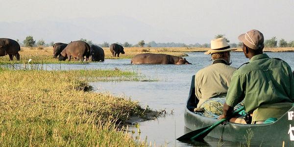 safari en canoe, rencontre avec des hippopotames