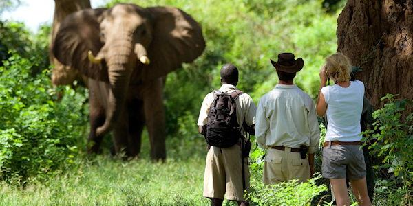 Observation d'un elephant en safari a pied