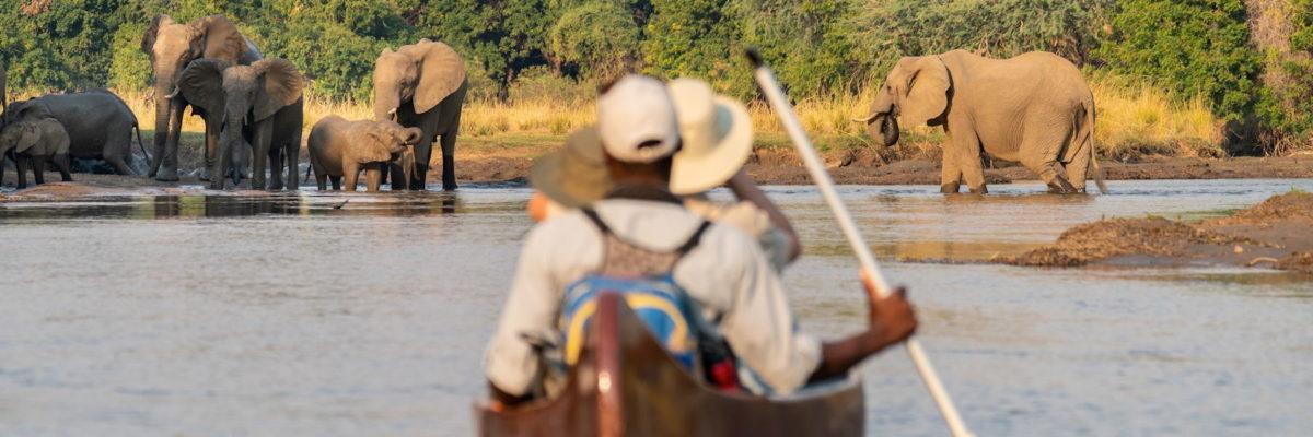 safari en canoe en passant a coté des éléphants