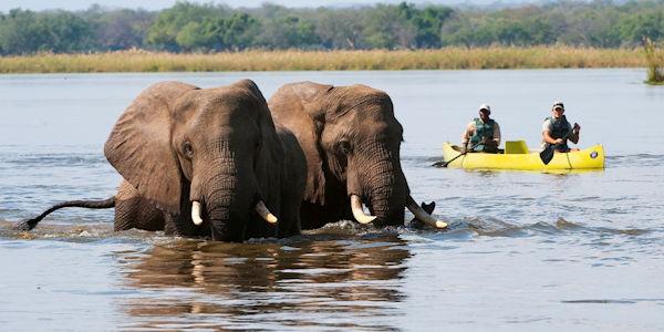 safari en canoe, rencontre avec des éléphants