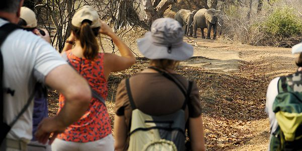 observation d'un troupeau d'elephant en safari a pied