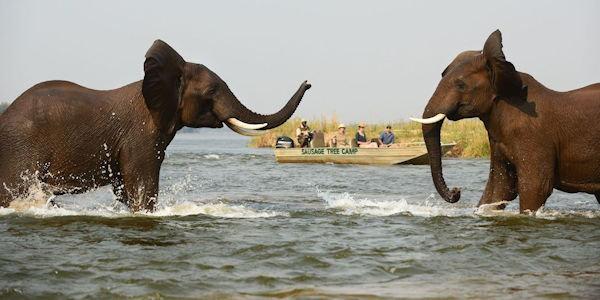 obervation en bateau d'éléphants dans le zambeze
