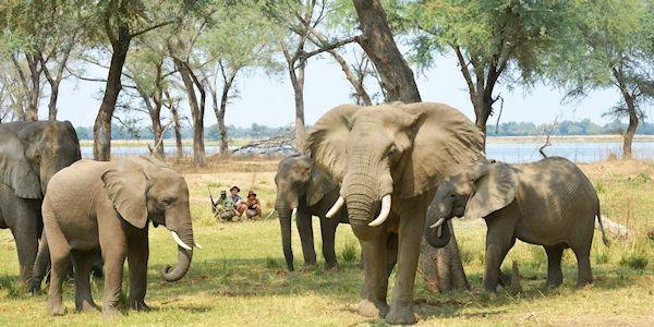 observation d'elephants en safari a pied