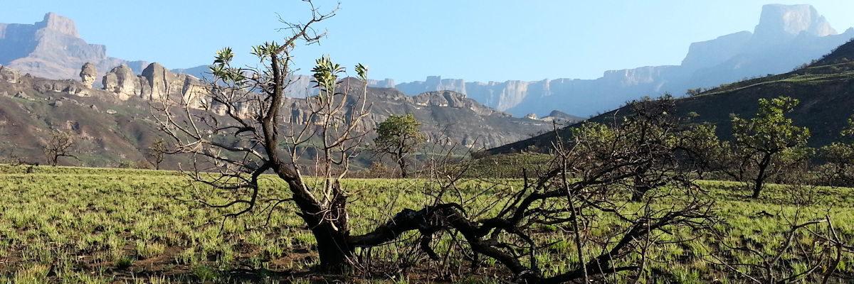 l'amphitheatre vu du bas - Drakenseberg
