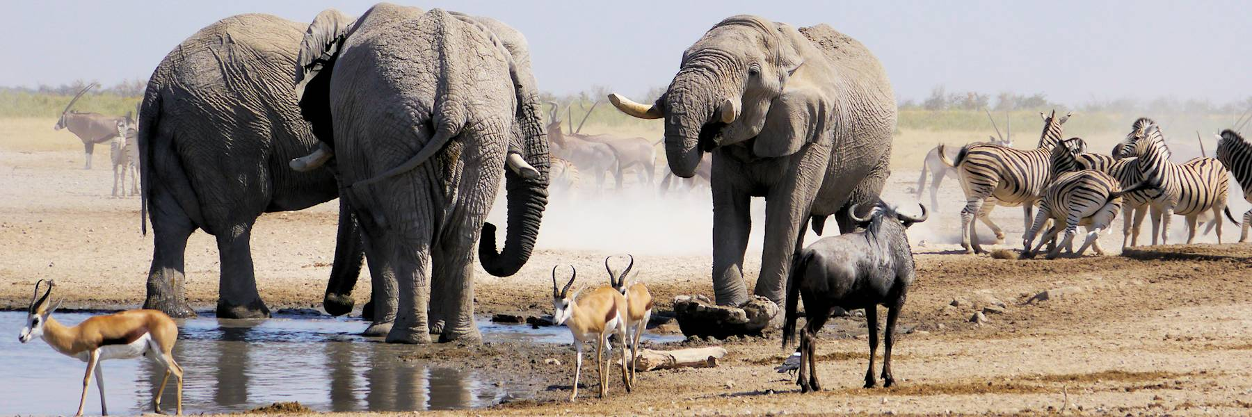 safari dans le parc d'etosha en namibie - obervation d'elephants au point d'eau