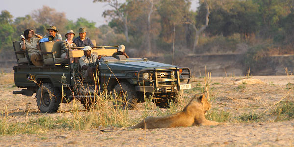 Open game drive safari in South Luangwa